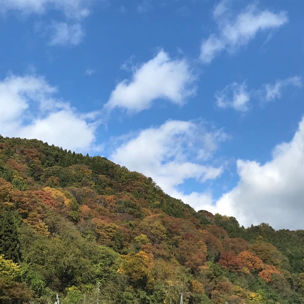 炭盆 11月9日から17日まで、ららぽーと横浜でポップアップイベントに参加します!